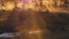 Mist rising from a wetland forest Stock Footage