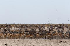 Crowded waterhole with wild animals Stock Photos
