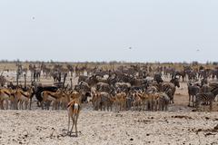 crowded waterhole with wild animals - stock photo