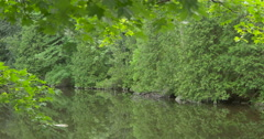 Amazing view of a lake surrounded by trees at Belfountain, Canada Stock Footage