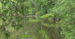 Peaceful lake surrounded by trees at Belfountain, Canada Stock Footage