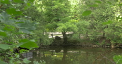 Peaceful lake view in a windy day at Belfountain, Canada Stock Footage