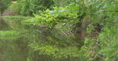 Trees reflecting in the lake at Belfountain, Canada Stock Footage