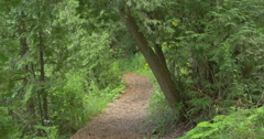 Stock Video Footage of Beautiful forest path at Belfountain, Canada