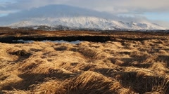 An Iceland field with yellow grass on strong wind with mountain in background Stock Footage