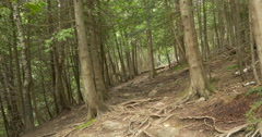 Fir trees and their roots in the forest at Belfountain, Canada Stock Footage