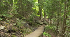 View of a deck in the forest at Belfountain, Canada Stock Footage