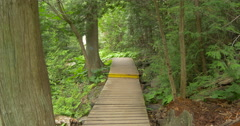 View of a wooden deck placed in the forest at Belfountain, Canada Stock Footage