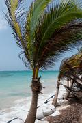 Small Palm Tree in the wind on caribbean white sand beach coast under blue sky - stock photo