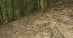 Tilt view of fir trees in the forest at Belfountain, Canada Stock Footage