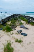 Narrow Path Filled With Big Stones in front of the ocean at a beach - stock photo