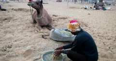 Camel and camel trader an early morning during Camel Fair in Pushkar Stock Footage