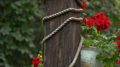 Rope wound around a wooden column and a red geranium, Sighisoara Stock Footage