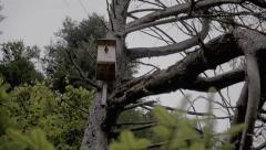 Nesting box on a big tree. Stock Footage