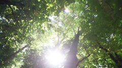 tree top with sun flare - stock footage