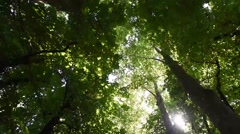 Stock Video Footage of tree top with sun flare