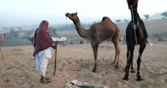 Camel Fair Pushkar 2015 Stock Footage