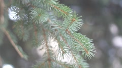Close up of tree in slow motion. Stock Footage