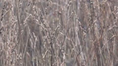 Dry winter grass in snow - stock footage