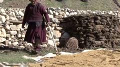 Farmer drying harvest in sun. Stock Footage