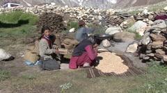 Farmers process harvest. Stock Footage