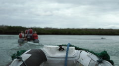 Boat in Mangroves Stock Footage