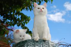 Two Kittens on Top of Roll of Garden Fencing Stock Photos