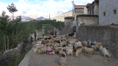 Karsha village life in Jammu and Kashmir. Stock Footage