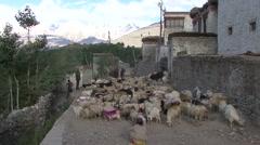 Karsha village life in Jammu and Kashmir. Stock Footage