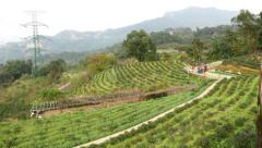 Old, empty and abandoned restaurant on tea terraces mountain slope Stock Footage