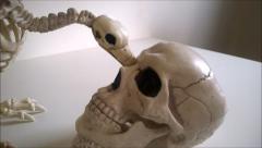 Vulture skeleton picking at skull Stock Footage