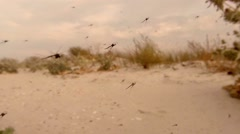 Swarm of Mosquitoes on a Background of Sky And clouds on the coast Stock Footage