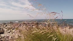 Wind Rustles Supple Herb Bushes on The Shores of Lake Baikal Stock Footage