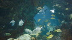Albuquerque NM Aquarium Fish Tank Shot Stock Footage