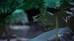 The debris of the lotus leaf - stock footage