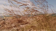 Wind Rustles Supple Herb on The Rocky Shores of Lake Baikal Stock Footage