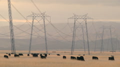 Cows&wires_WS Stock Footage