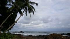 Palmtrees at the coast of Montezuma - stock footage