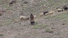 Sheep herder walking among sheep in Himalaya 2 Stock Footage