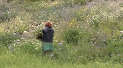 Traditional dressed woman working in the green fields in the Himalayas Stock Footage