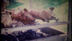 2996 - barbecueing chicken & whole pigs - vintage film home movie Stock Footage
