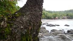The silk floss tree at the coast of Montezuma Stock Footage