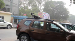 Dog on the roof of the car in Indian city Stock Footage