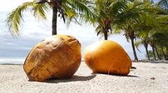Close up from two coconuts and palmtrees at Santa Teresa beach - stock footage