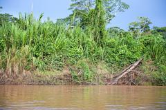 Amazon River Outside Stock Photos