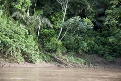 Amazon River - stock photo
