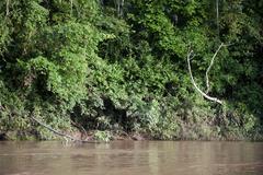 Amazon River Stock Photos