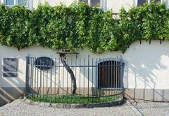 The Old Vine in Maribor Stock Photos