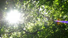 Sun shines through the crowns of the tall trees in the calm park - breeze blows  Stock Footage