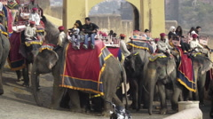 Tourists on elephants going to Amer Fort, Jaipur Stock Footage